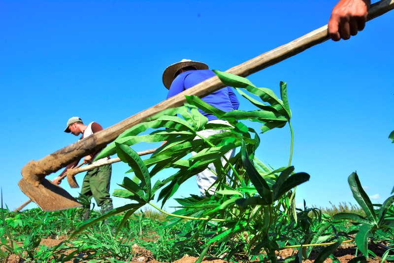sancti spiritus, agricultura, produccion de alimentos, campesinos