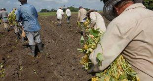 sancti spiritus, dia del campesino, anap, campesinos, produccion de alimentos, agricultura
