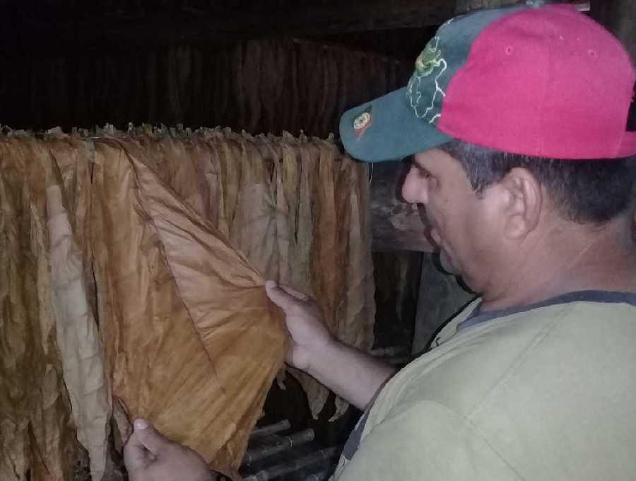 cabaiguan, tabaco tapado, campesinos, dia del campesino
