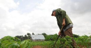 cuba, cooperativas, agricultura, alimentos