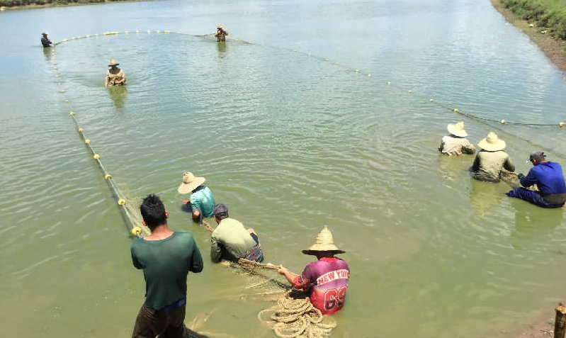 sancti spiritus, pesca, acuicultura, estacion de alevinaje de la sierpe