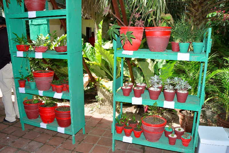 sancti spiritus, jardin botanico de sancti spiritus, verano, etapa estival
