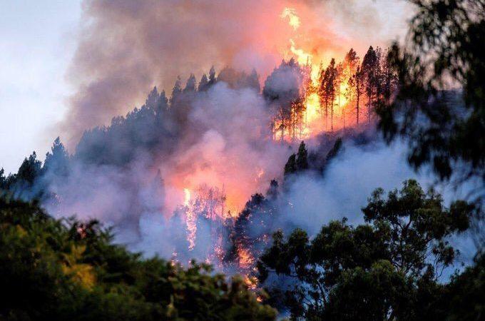 Más de la mitad de los cerca de 71 mil 500 incendios reportados en Brasil este año se situó en la región amazónica.