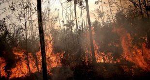 brasil, incendios, amazonia, canciller cubano, bruno rodriguez parrilla