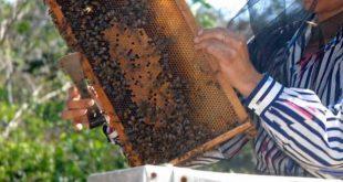 sancti spiritus, apicultura, produccion de miel