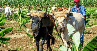 cONSEJO DE mINISTROS, TRACCIÓN ANIMAL, AGRICULTURA