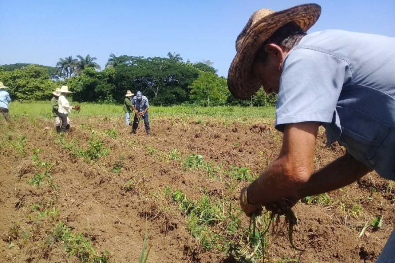 sancti spiritus, cpa, produccion de alimentos, ganaderia, cooperativas