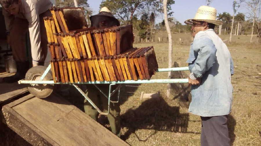El apicultor apela a las innovaciones para humanizar el trabajo.