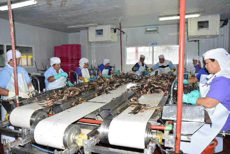 Desde esta industria se garantiza la materia prima para la elaboración de unos 15 surtidos en la nueva planta de conformado. (Fotos: Vicente Brito / Escambray)