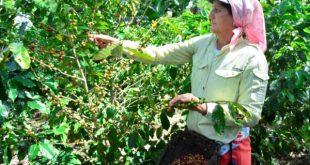 sancti spiritus, mujeres, produccion agricola, anap, cooperativas de produccion agropecuaria