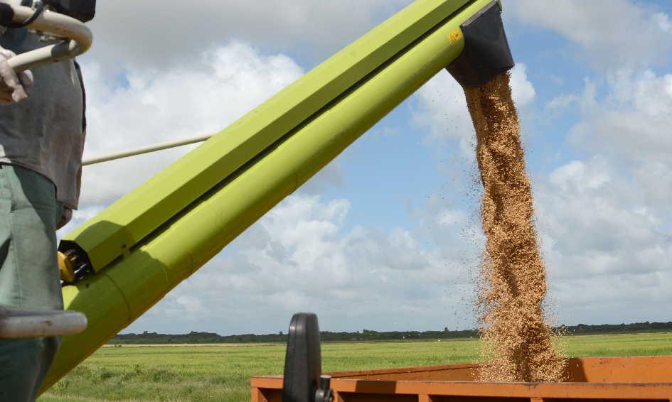 La mejor alternativa para contrarrestar el déficit de la siembra es subir los rendimientos agrícola e industrial.