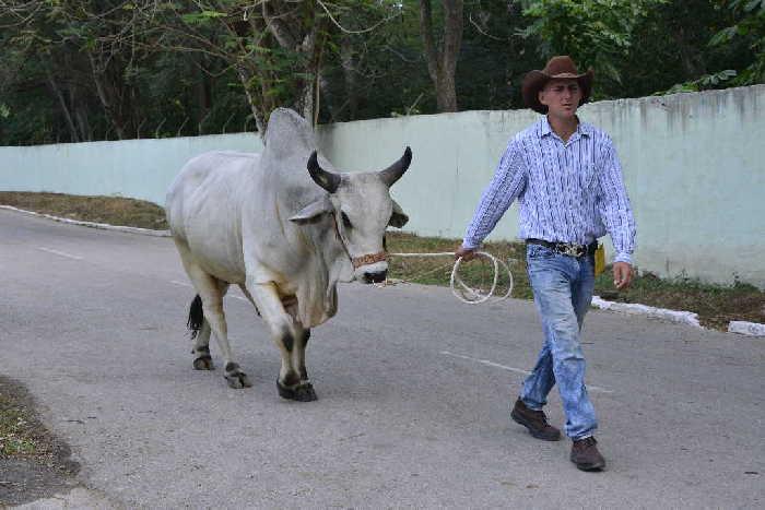 sancti spiritus, feria del cebu cubano