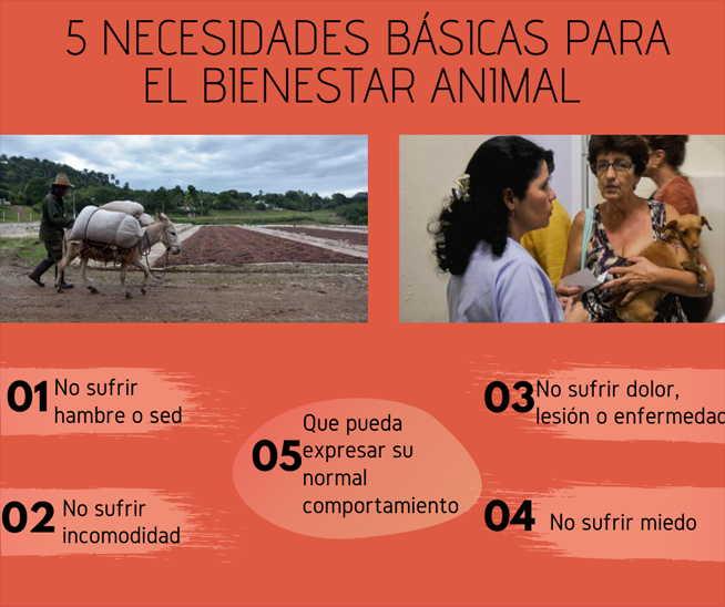 cuba, animales, proteccion animal, ministerio de la agricultura