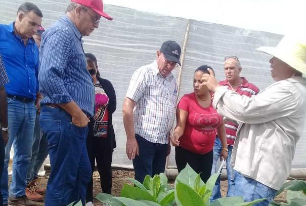 sancti spiritus, agricultura, tabaco tapado, cultivos varios, apicultura, planta de beneficio de miel