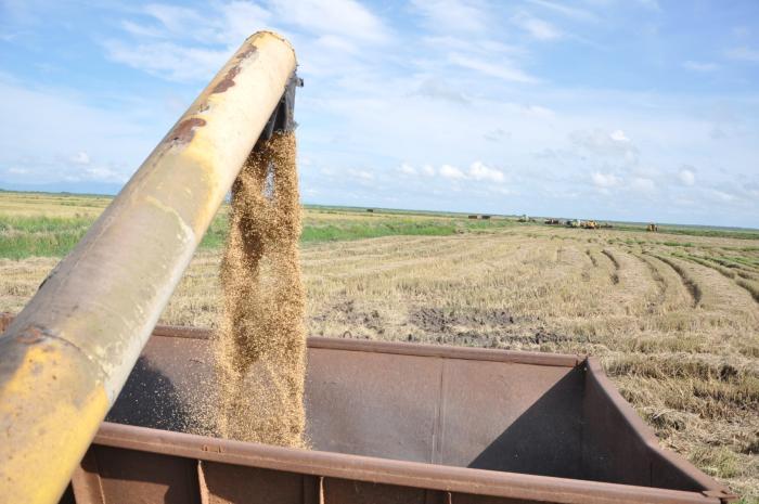 sancti spiritus, arroz, la sierpe, empresa agroindustrial de granos sur del jibaro, ciencia y tecnica, economia