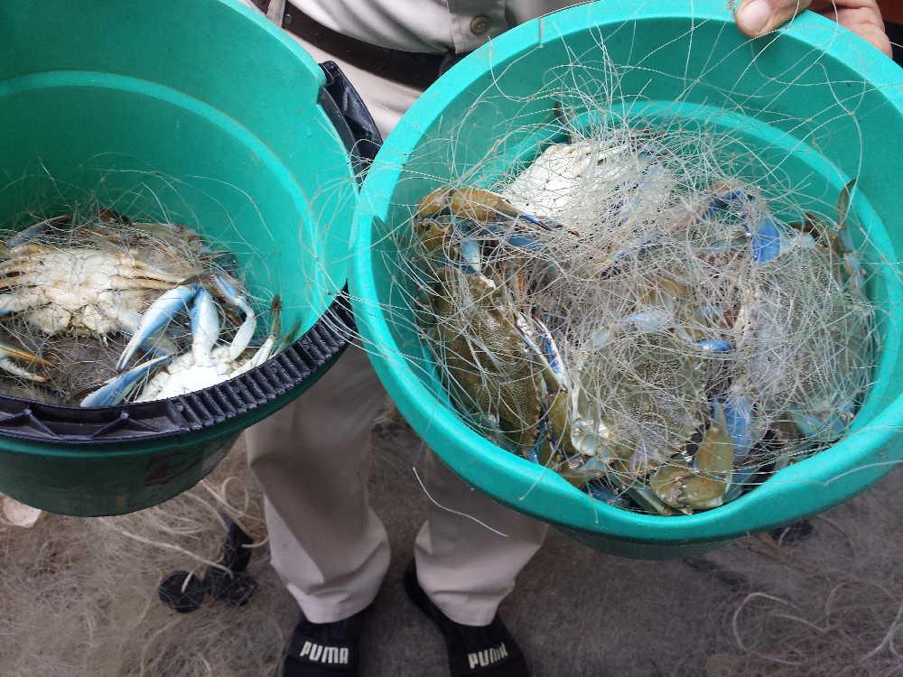 Pesca, Inspección, Ilegalidades
