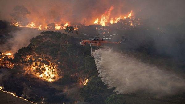 Las llamas acabaron con más de 2 millones de hectáreas de bosques en Australia. (Foto: TeleSUR)