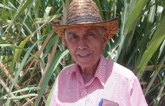 jatibonico, agricultura cañera, central uruguay, zafra azucarera
