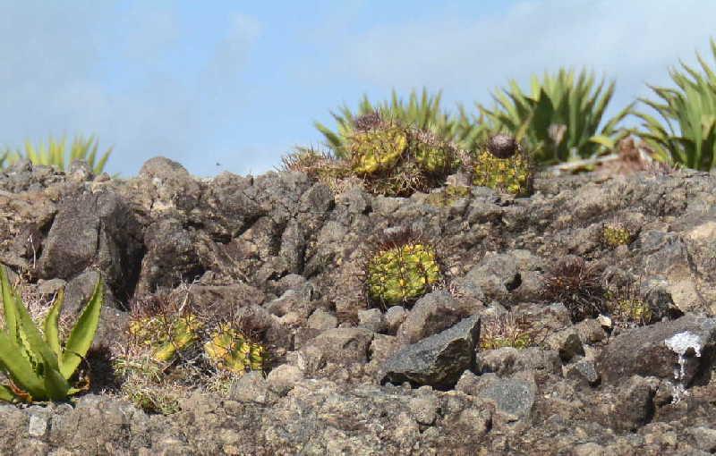 sancti spiritus, flora y fauna, reserva floristica manejada, lebrije