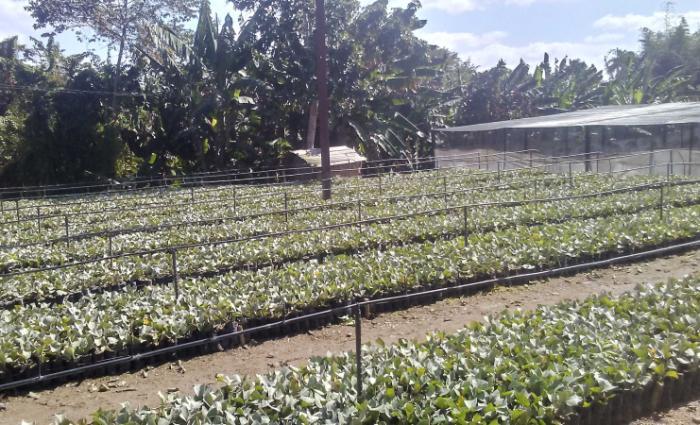 fomento, frutas, produccion de frutas