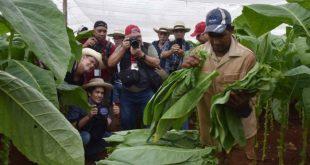 cuba, festival del habano, tabaco