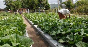 sancti spiritus, agricultura urbana, agricultura, produccion de alimentos