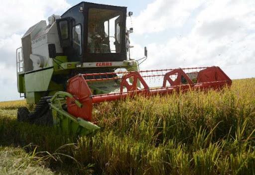 La agricultura en Cuba no se detiene pese a la pandemia.