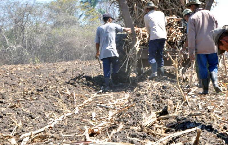 El grueso de la plantación está previsto para junio, momento óptimo para la actividad. (Foto: José Luis Camellón)