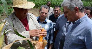 cuba, miguel diaz-canel, presidente de cuba, dia del campesino, campesinos espirituanos, agricultura, produccion de alimentos
