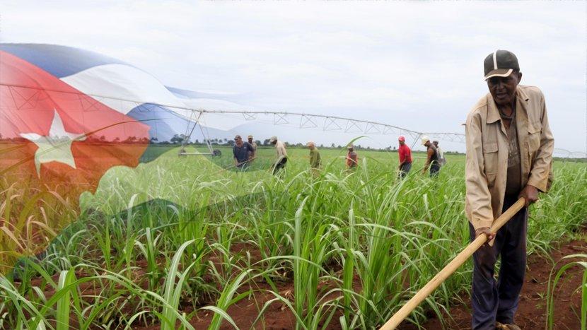 El desarrollo y fomento de la producción local de alimentos figura entre las respuestas que prioriza el país. (Foto: Presidencia Cuba)