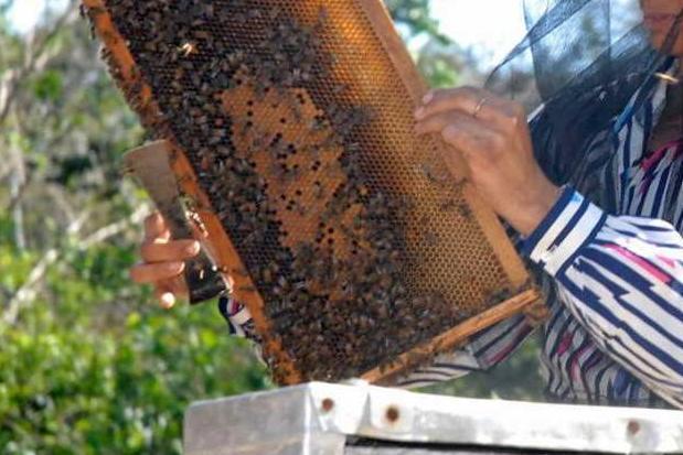 sancti spiritus, apicultura, produccion de mil, sustitucion de importaciones, miel de abeja, covid-19