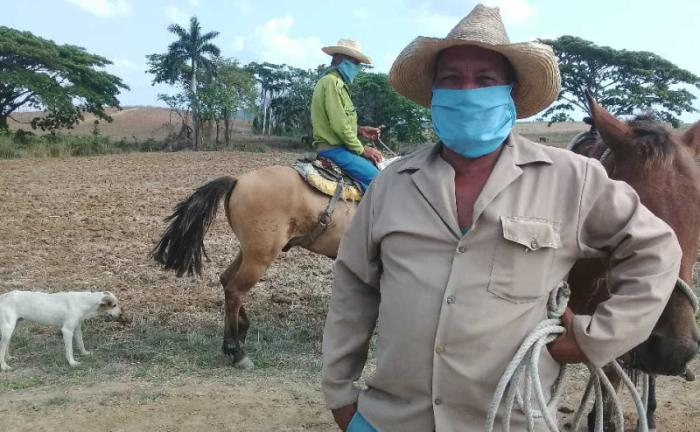 sancti spiritus, coronavirus, produccion de alimentos, covid-19, salud publica, agricultura