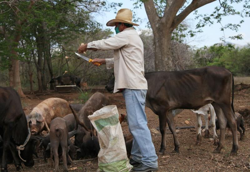 sancti spiritus, dia del campesino, campesinos espirituanos, agricultura, produccion de alimentos