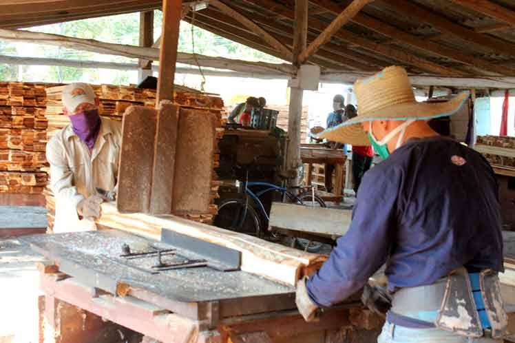 sancti spiritus, sustitucion de importaciones, empresa forestal integral