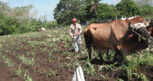 Agricultura, alimentos, Sancti Spíritus, pos Covid-19