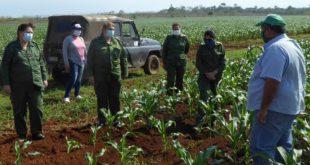 sancti spiritus, produccion de alimentos, recuperacion post covid-19 en cuba, covid-19, coronavirus, economia cubana
