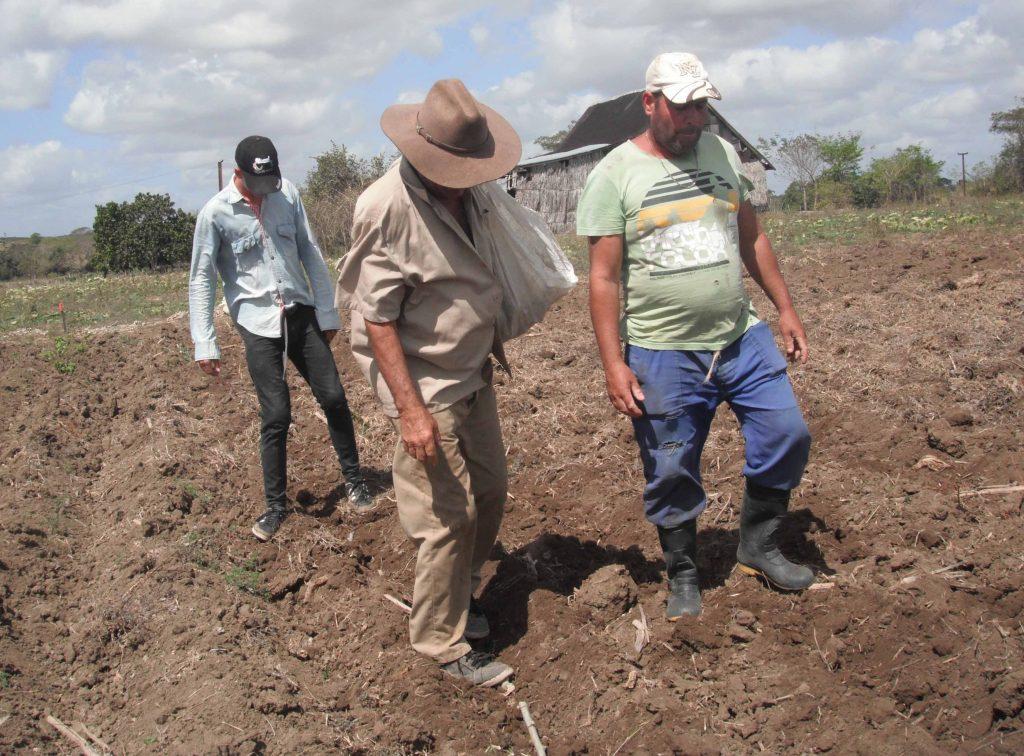 Los agriculyores espirituanos tienen los planes de siembra de primavera cumplidos. (Foto: Eduardo Sicilia)