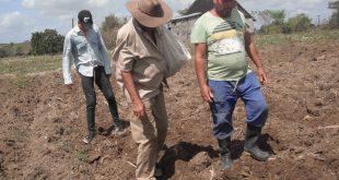 Agricultura, Recuperación, pos COVID-19
