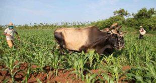 cuba, economia cubana, medidas economicas, produccion de alimentos