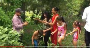 sancti spiritus, jardin botanico, verano, etapa estival
