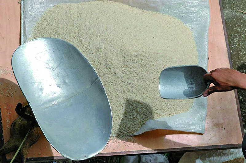 arroz, cosecha arrocera, arrocera sur del jibaro, canasta basica, empresa agroindustrial de granos sur del jibaro