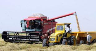 Arroz, inversiones, Agricultura, Cuba