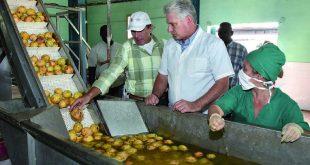la sierpe, sur del jibaro, empresa agroindustrial de granos sur del jibaro, arrocera, exportaciones