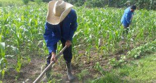 Agricultura, Yaguajay, tercera edad