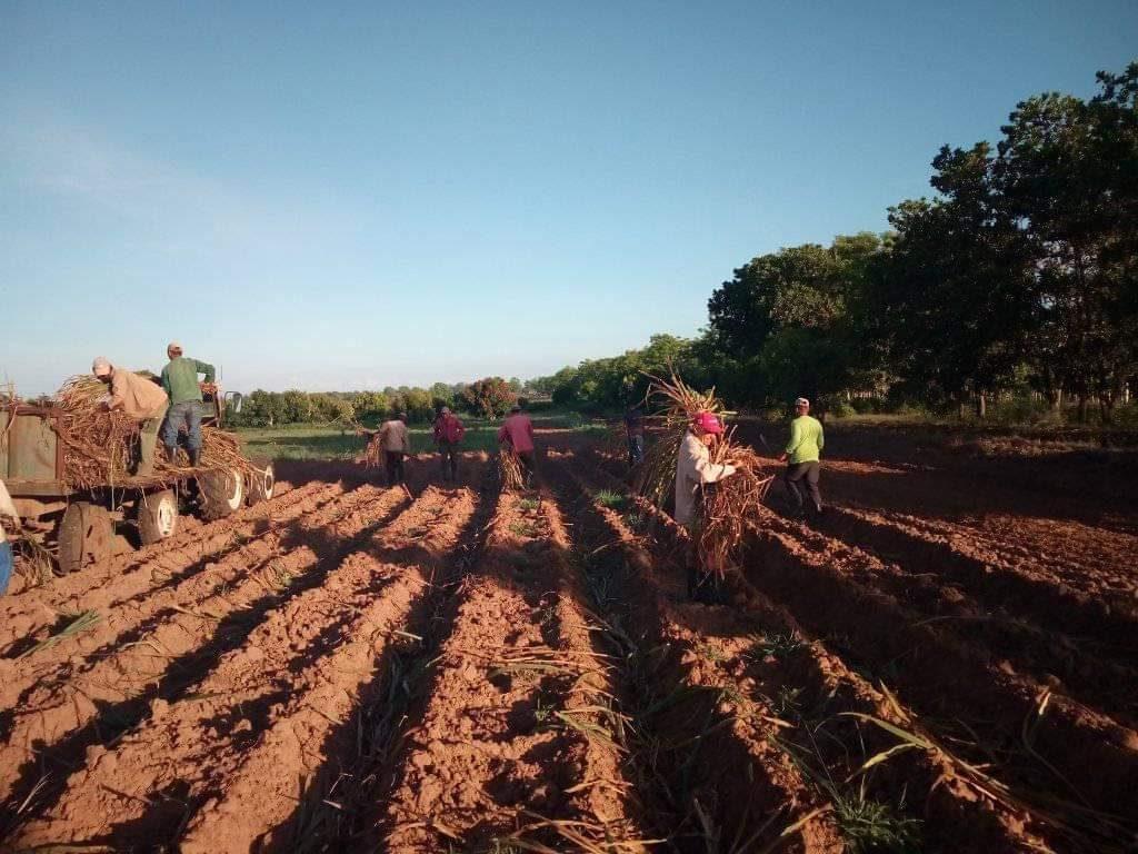 En La Sierpe, como en distintos puntos de la provincia, los jóvenes se integraron a las actividades productivas. (Foto: Michel Gómez)