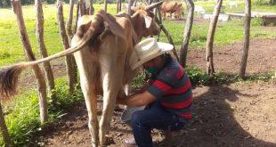 yaguajay, ganaderia, dia internacional de la juventud, venegas