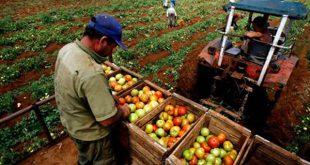 Agricultura, Cuba, Trabajo
