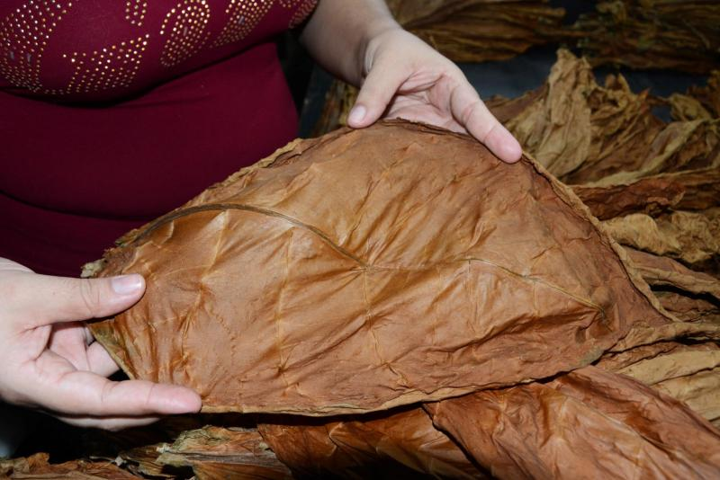 sancti spiritus, tabaco, empresa de acopio y beneficio del tabaco, tabaco torcido cosecha tabacalera, exportaciones