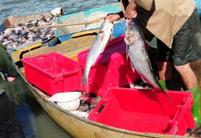 sancti spiritus, pesca, trabajo por cuenta propia, trabajadores por cuenta propia, ley de pesca