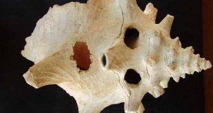 sancti spiritus, arqueologia, hallazgo arqueologico, oficina del conservador